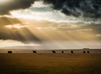 A new climate calculator for livestock aims to help ranchers reduce emissions